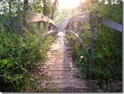 Busca puentes 5