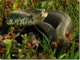 Serpiente de Verano