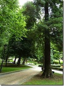 Secoya Campo San Francisco, Oviedo