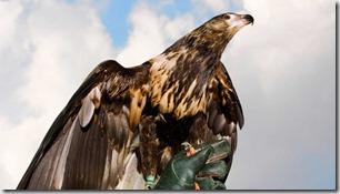 Águilas contra drones II